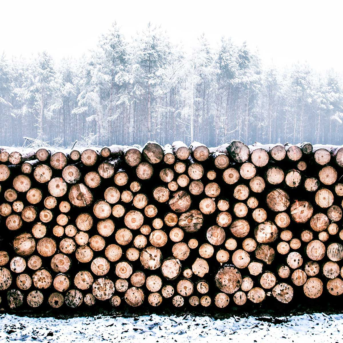 hout-in-winter